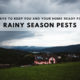 Ways to Keep You and Your Home Ready for Rainy Season Pests