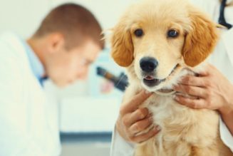These Tips Here Help You Find the Best Home Visit Vet Melbourne