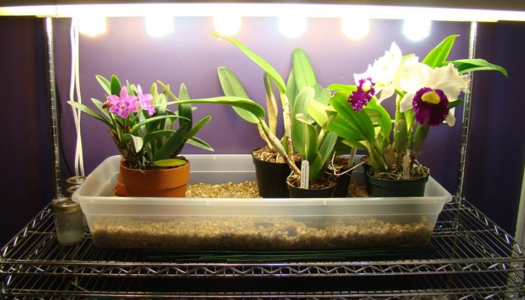 artificial-lights-for-orchids
