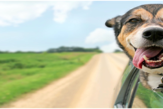 Natural Pet Pain Relief: 3 Great Benefits of CBD and Here Is How You Can Feed CBD to Your Pets