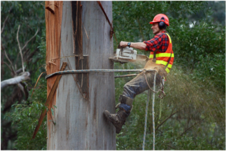 Why it is important to hire a tree service company?