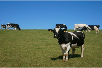 Refrigeration Solution for Australia Dairy Farm