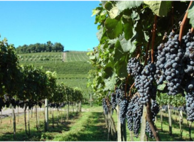 Tamar Valley's Photographed Vineyards And Wineries
