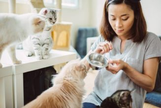 Cat-Sitters – Instructions For Cat Owners