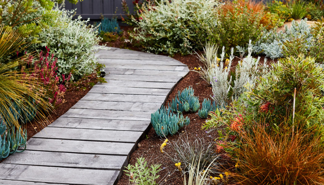 Benefits Of Having Aulax Bronze Haze And Other Shrubs In Your Garden