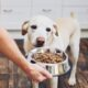 A Lot To Kibble About – Pet Food Hazards With GMO Ingredients