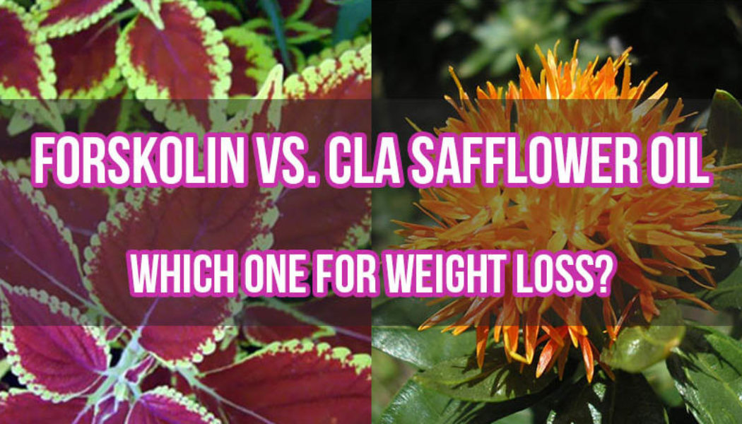 Which Supplement is best for Weight Loss – Forskolin or CLA Safflower Oil?