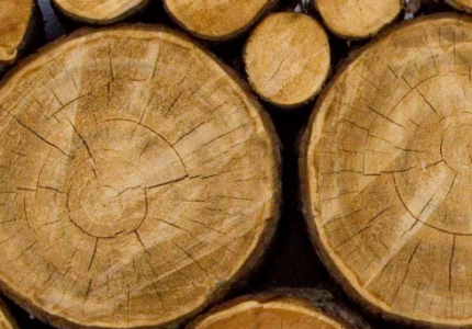 Eco Firewood and Its Significance in the Modern Lifestyle
