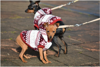 4 Most Popular Apparel for Dogs
