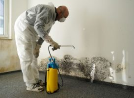Top Signs of Mold in the House
