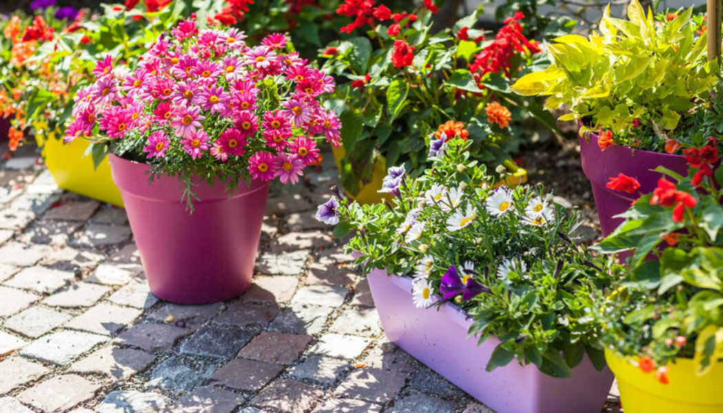 How You Can Gardening in Plastic Pots at Home