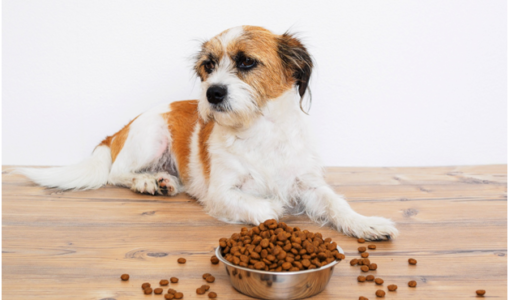 Buy Top Quality Pet Products in New Zealand