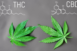 The Difference it Makes – The Great Divide of THC and CBD