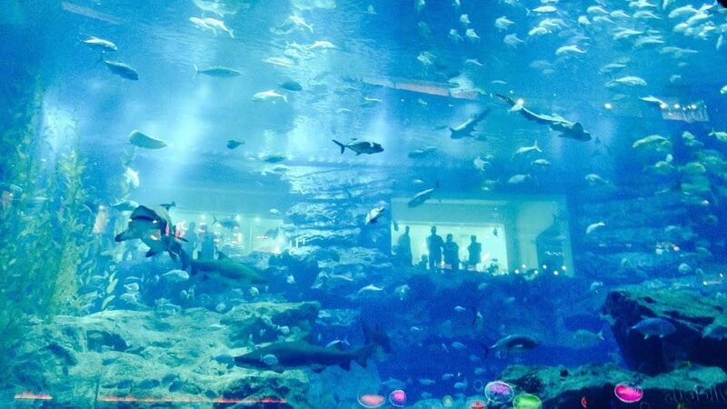 Why is Dubai Aquarium Voted Best in the World?
