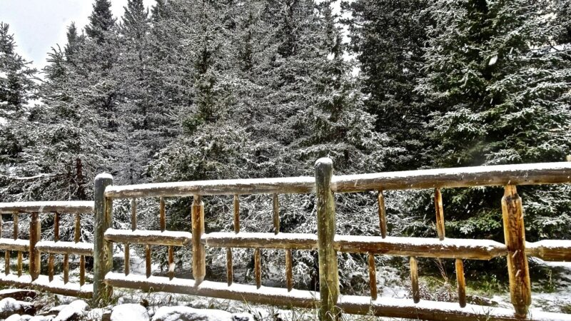 An In-Depth Look at the Clear Advantages of Post & Rail Fencing for Your Rural Property