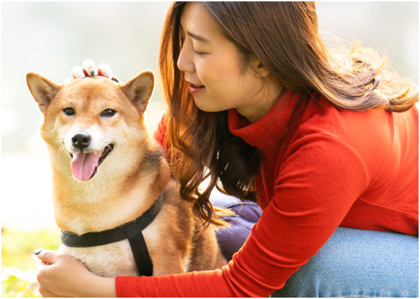 How Can You Make Your Pets Stay Healthy?